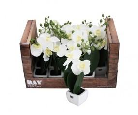 Deko Pflanze Orchidee im Display